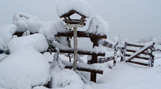 Het heeft gesneeuwd en dat vinden wij leuk!