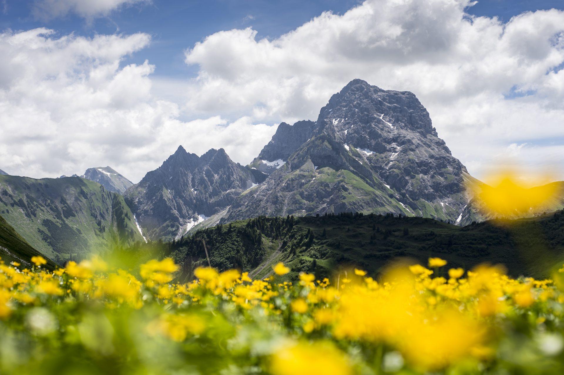 Panorama Derratal Blumen @Dominik Berchtold (10).jpg