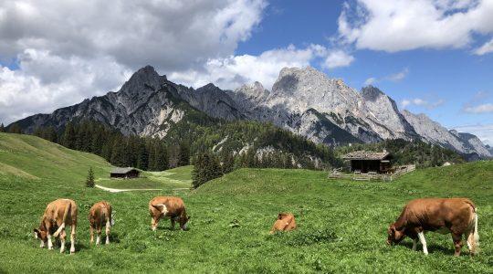 Wandeling in het natuurpark Weissbach